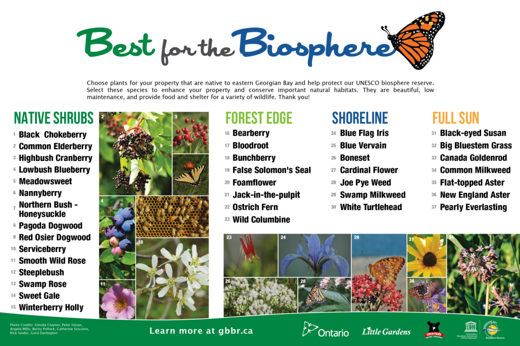 Best for the Bipsphere Brochure