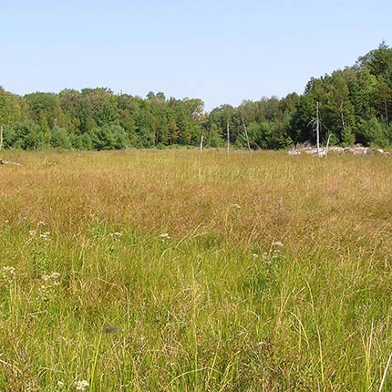 Field or grassland photo