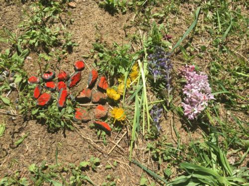 Colours in nature CR Grade 4 Humphrey