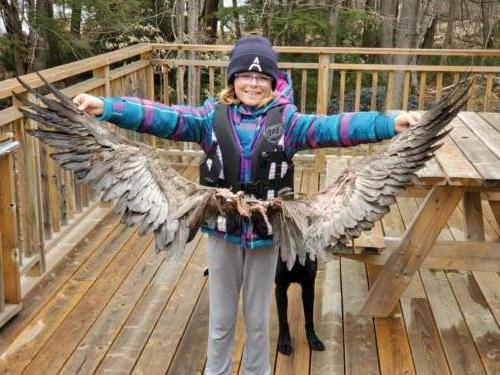 Turkey vulture wings